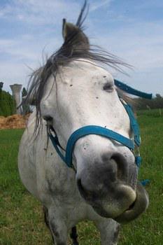 Le cheval rigolo les chevaux - Cheval rigolo ...
